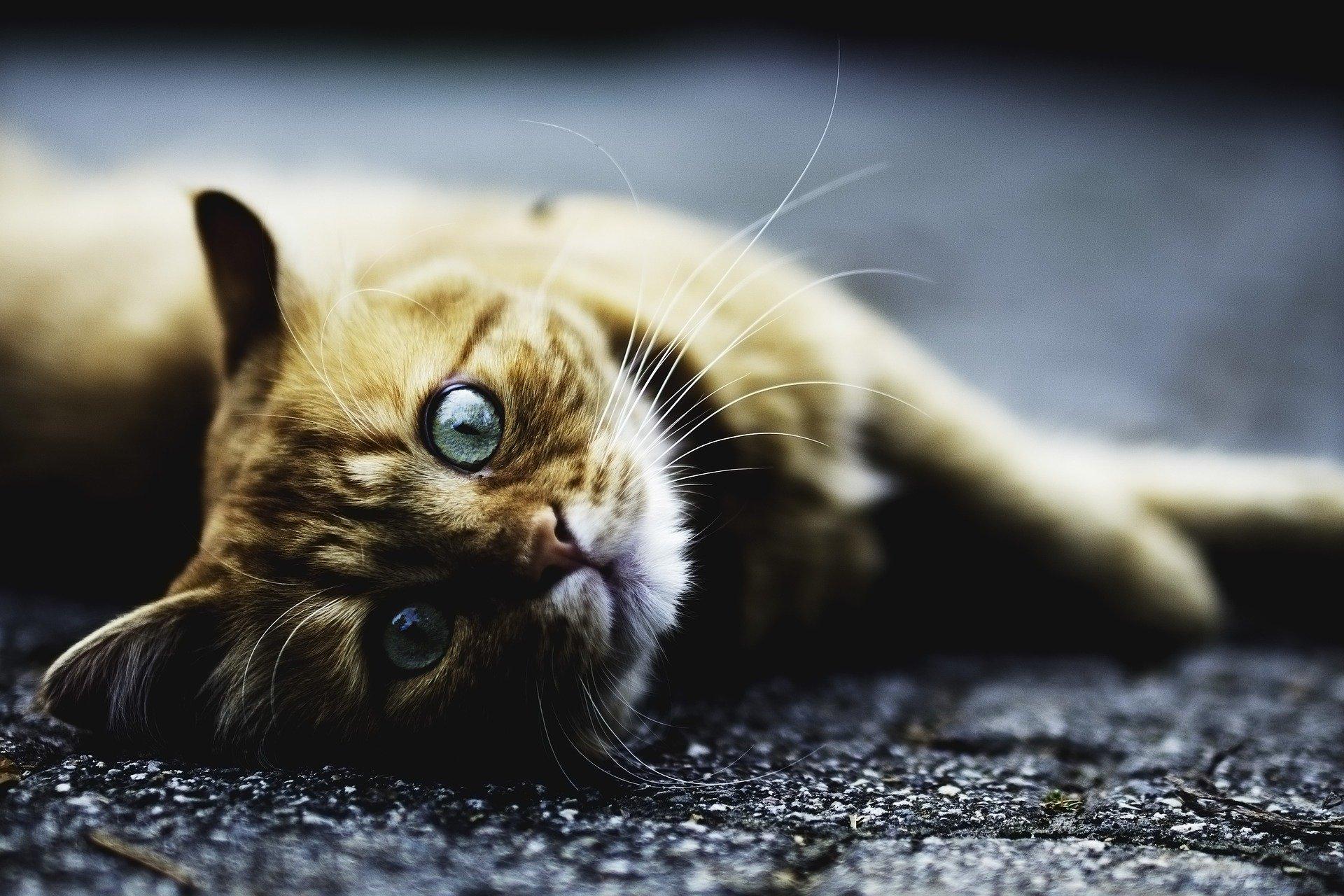 Katze auf dem Teppich